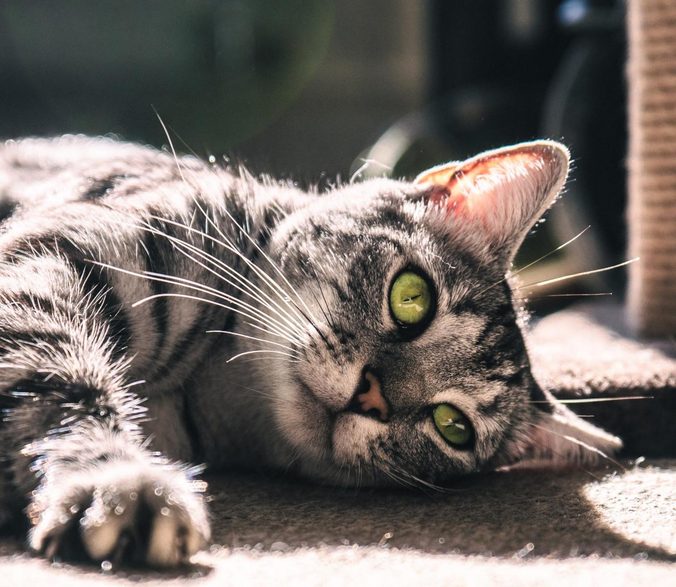 «Йошкин кот» не станет товарным знаком
