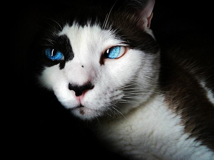 Ёшкин кот не станет товарным знаком
