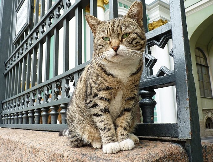 Эрмитажный кот станет брендом
